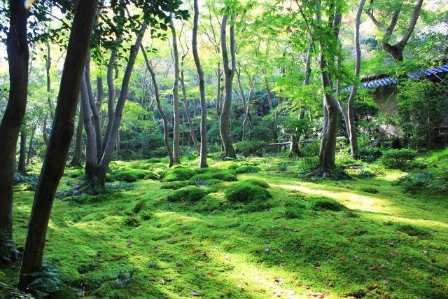 kyoto_giouji